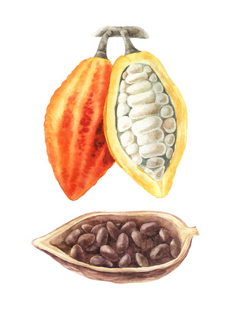 Watercolor illustration of cocoa beans