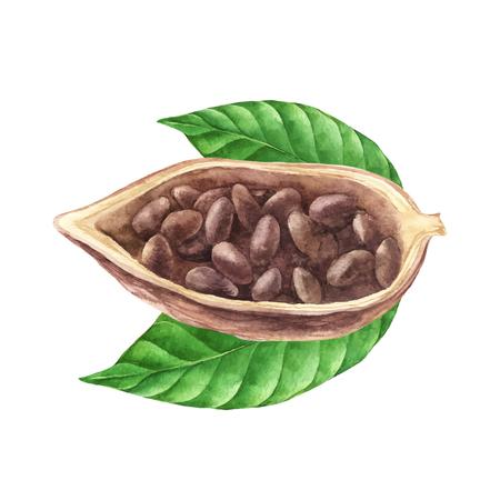 Ripe watercolor cocoa beans