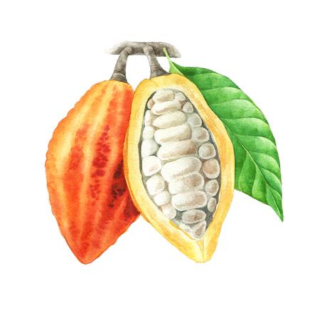 수채화 물감 코코아 포드 잎 스톡 콘텐츠