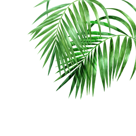 Watercolor palm leaves on white background