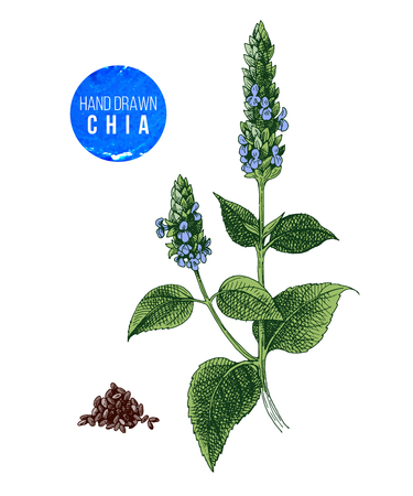 Chia plant and seeds Иллюстрация
