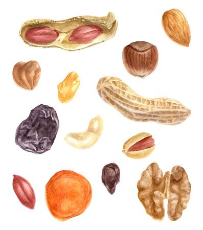 Noten en gedroogde vruchten aquarel set