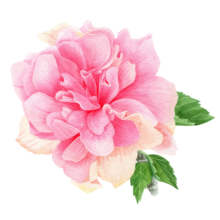Watercolor tropical pink hibiscus with leaves Vector illustration. Vettoriali