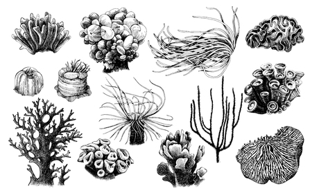 Hand drawn collection of corals reef plants