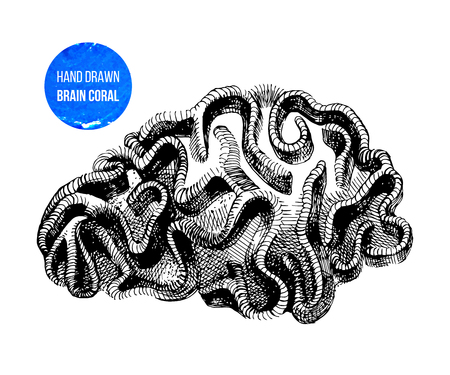 Brain coral isolated Illustration