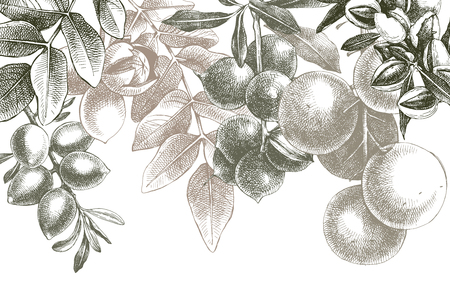 Background with hand drawn nuts on branches Vectores