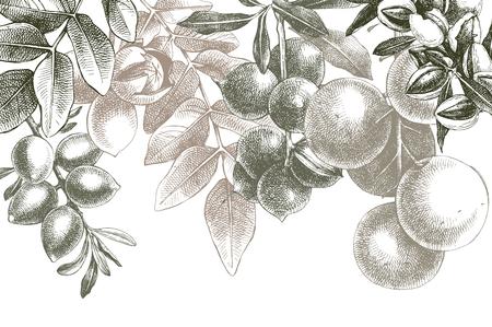 Hintergrund mit handgezeichneten Nüssen auf Zweigen Standard-Bild - 102216899