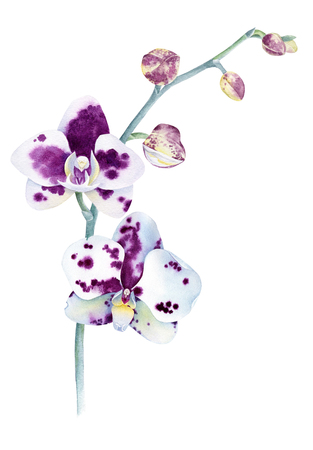 Watercolor orchid branch. Hand drawn illustration isolated on white background. Фото со стока