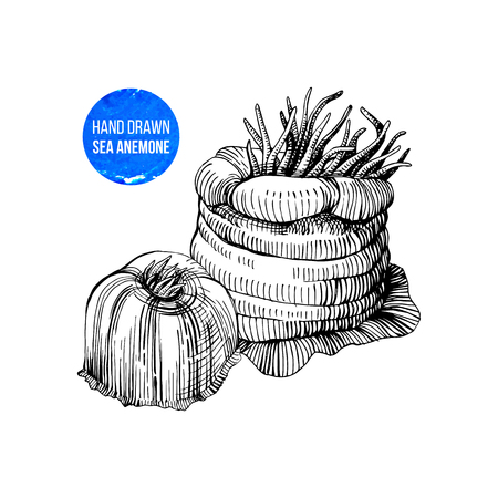 Hand drawn black and white sea anemones. Vector illustration 일러스트