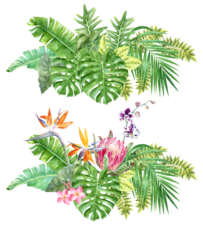 Bright tropical borders with jungle plants.