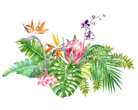 Bright tropical border with jungle leaves and flowers