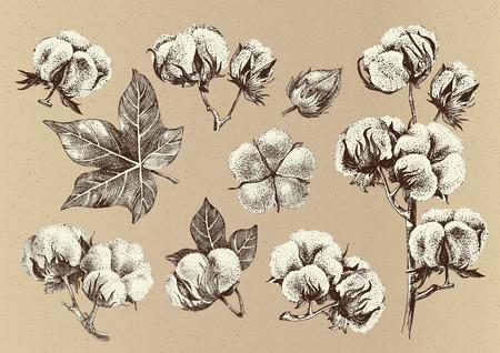 Dibujado a mano conjunto de ramas de algodón. Colección ecológica de estilo vintage. Ilustración vectorial muy detallada