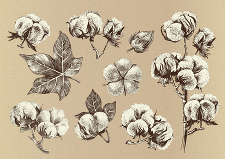 Hand drawn set of cotton branches. Eco collection in vintage style. Highly detailed vector illustration