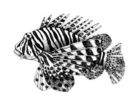 Hand drawn vector lionfish. Dangerous coral reef fish