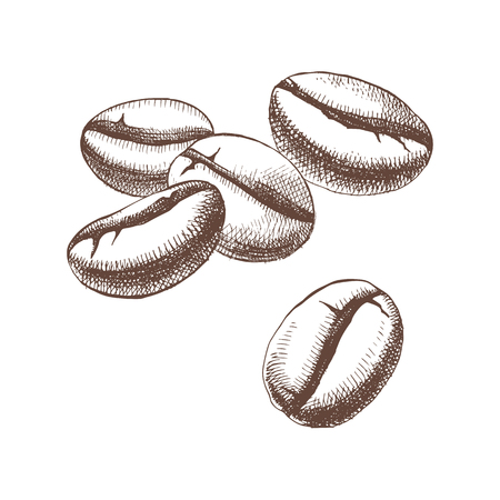 Hand sketched coffee beans isolated on white background. Vector illustration