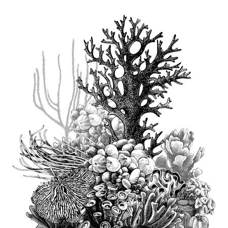 Hand drawn coral reef. Vector illustration in vintage style Archivio Fotografico - 114683058