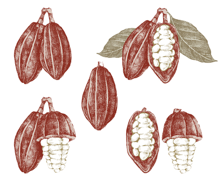 Hand sketched cocoa beans and branches set. Highly detailed vector illustration