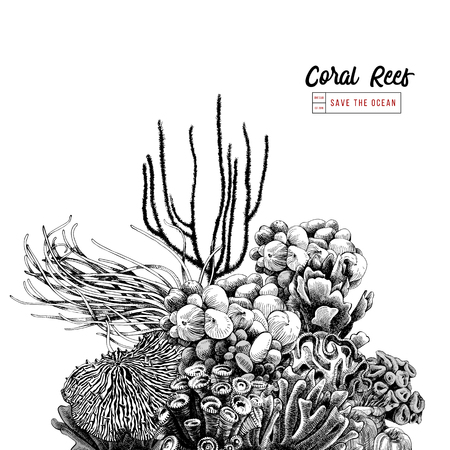 Hand drawn coral reef. Vector illustration in vintage style