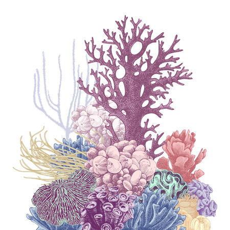 Hand drawn colorful group of corals isolated on white background. Vector illustration