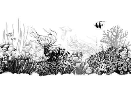 Handgezeichnete schwarze und weiße nahtlose Korallengrenze. Vektor-Illustration