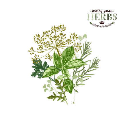 Hand drawn background with culinary herbs. Vector illustration in retro style