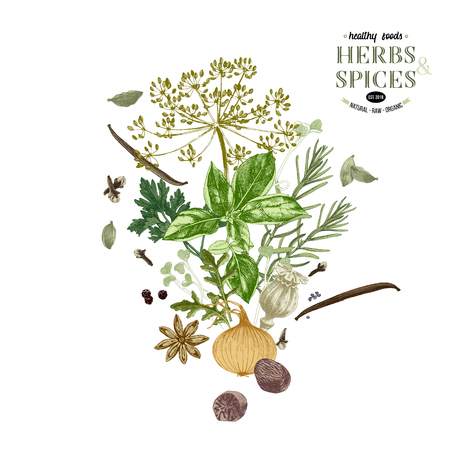 Hand drawn background with herbs and spices. Vector illustration in retro style