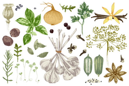 Fresh organic colorful hand drawn herbs and spices set. Vector illustration in vintage style Illustration