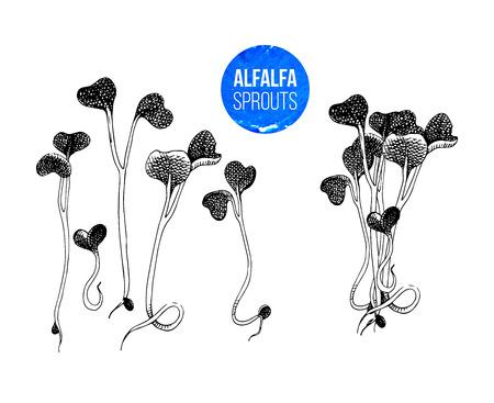 Hand drawn alfalfa sprouts - kai wah-rei - vector illustration Illustration