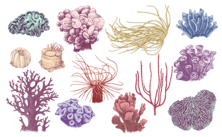 다채로운 산호의 손으로 그린 컬렉션입니다. 빈티지 스타일의 벡터 일러스트 레이 션