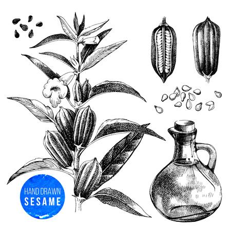 Set di sesamo disegnato a mano - pianta, semi e olio. Illustrazione vettoriale in stile vintage