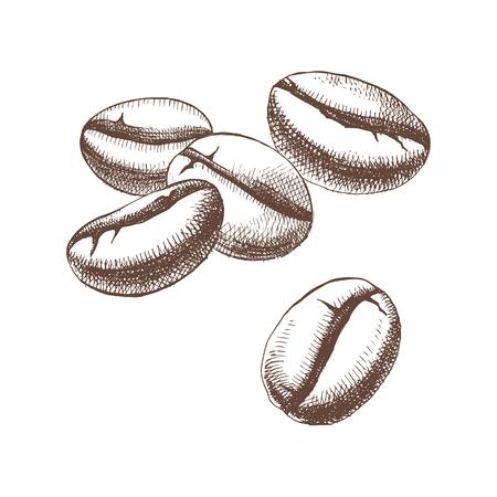 Hand skizzierte Kaffeebohnen Standard-Bild