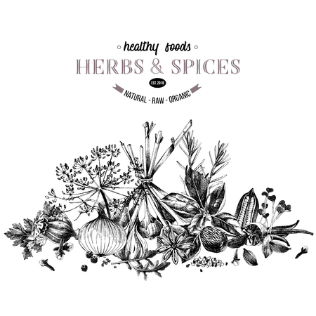 Hand drawn border with herbs and spices- parsley, dill, onion, garlic, rosemary, basil, poppy, sesame, cloves, black pepper, vanilla, arugula, nutmeg and cardamom. Vector illustration in retro style