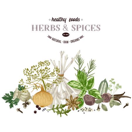 Hand drawn border with herbs and spices- parsley, dill, onion, garlic, rosemary, basil, poppy, sesame, cloves, black pepper, vanilla, arugula, nutmeg and cardamom. Vector illustration in retro style