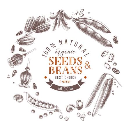 Composición de corona de semillas y frijoles con plantas dibujadas a mano y diseño tipográfico Ilustración de vector