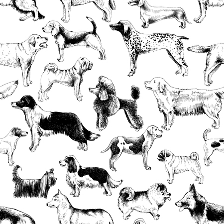 Seamless pattern with dog breeds