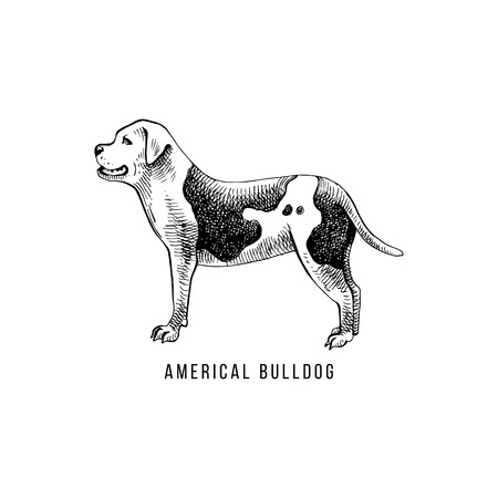 American bulldog sketch and lettering in dogs silhouette