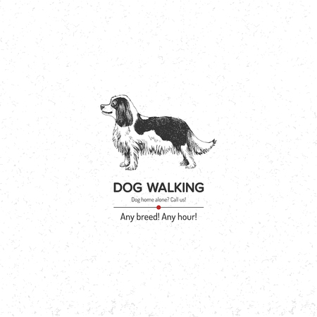 King Charles Spaniel for dog walking business