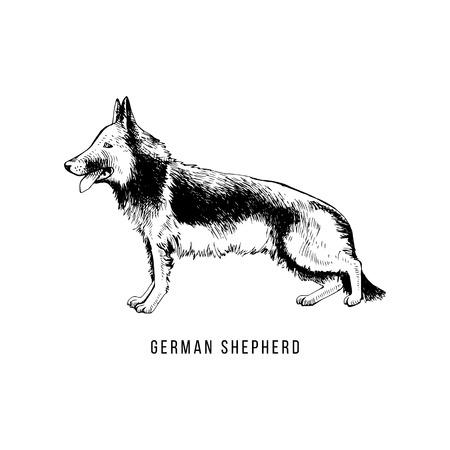Hand drawn German Shepherd Archivio Fotografico - 111438410