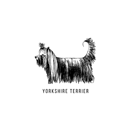Hand drawn Yorkshire Terrier