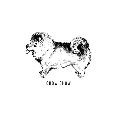 Hand drawn Chow Chow