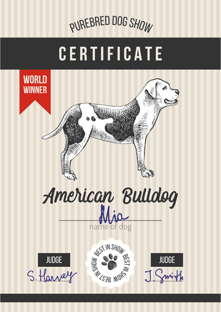 Dog show certificate with american bulldog