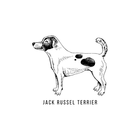 Hand drawn Jack Russel terrier
