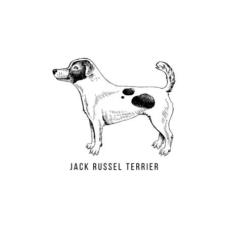 Hand drawn Jack Russel terrier