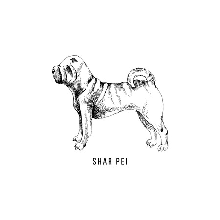 Hand drawn Shar Pei