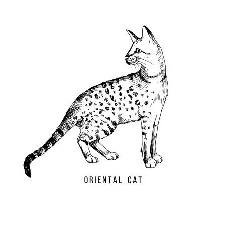Hand drawn oriental cat Иллюстрация