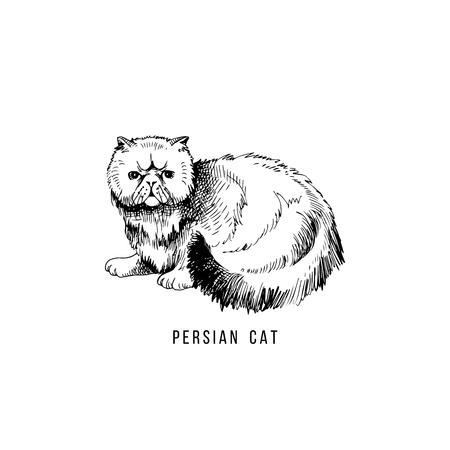 Hand drawn persian cat Stock Vector - 111438447