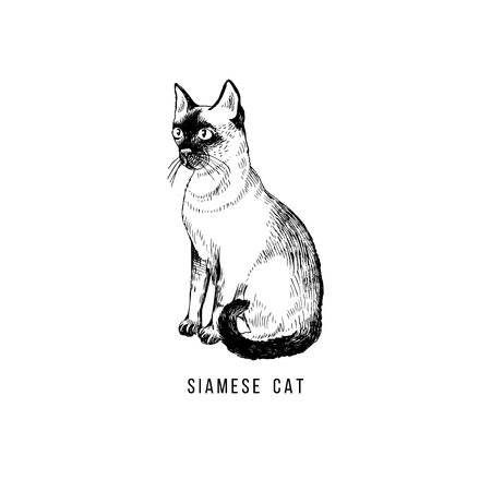 Hand drawn siamese cat Иллюстрация