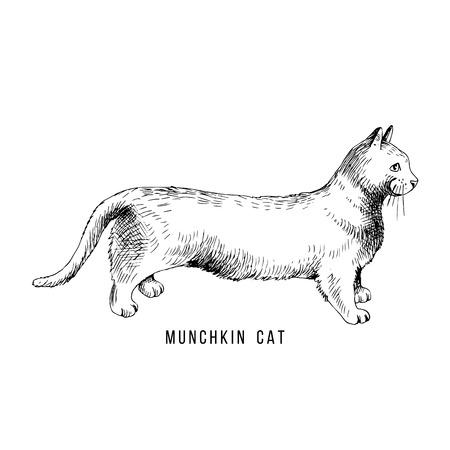 Hand drawn munchkin cat Иллюстрация