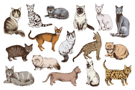 16 bunte handgezeichnete Katzenrassen. Vektor-Illustration Vektorgrafik