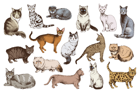 16 colorful hand drawn cat breeds. Vector illustration Ilustração